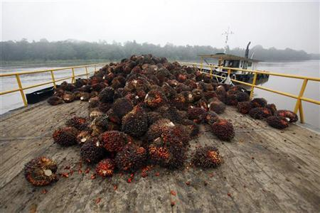 Oil palm fruits are gathered on a deck before being collected for process, near Kinabatangan river in Malaysia's state of Sabah on the Borneo island February 19, 2009. REUTERS/Bazuki Muhammad