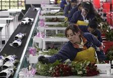 <p>Foto de archivo de una floricultora durante los preparativos para el día de San Valentín en Tenjo, Colombia, feb 11 2009. Plegarias a San Valentín se escuchan por doquier entre los floricultores colombianos, no sólo para que lluevan los enamorados sino para que demuestren su amor comprando las flores que envían al resto del mundo. REUTERS/John Vizcaino (COLOMBIA)</p>
