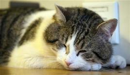 <p>Foto de archivo del gato Larry en un cuarto de Downing Street en Londres, feb 15 2011. Downing Street tiene un nuevo ocupante, un personaje criado en la calle con licencia para matar. BRITAIN-CAMERON/CAT REUTERS/Mark Large/pool</p>