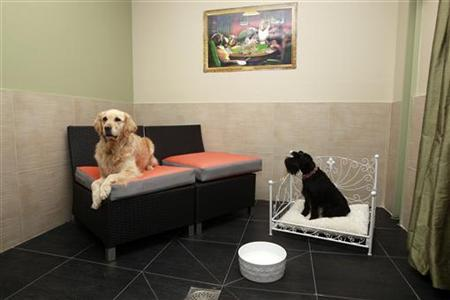 Dogs guests Cleo (L) and Belle are seen in a room in the Actuel Dogs Hotel in Vincennes near Paris February 24, 2011. REUTERS/Jacky Naegelen