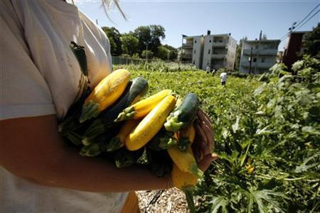 Fourteen year-old Sarah Banerji, from the suburban town of Lincoln, Massachusetts, carries freshly harvested zucchini and squash on an urban farm plot in the Dorchester neighborhood of Boston, Massachusetts in this August 9, 2007 file photo. REUTERS/Brian Snyder