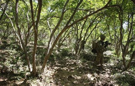 U.S. Army soldiers of the 10th Mountain Division conduct a patrol through a pomegranate orchard near their base at Strongpoint Stansberry in the Arghandab Valley north of Kandahar April 21, 2011. REUTERS/Bob Strong