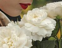 <p>A model poses with the William and Catherine rose, by David Austin Roses, during media day at the Chelsea Flower Show 2011, London May 23, 2011. REUTERS/Luke MacGregor</p>