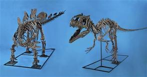 "<p>This handout image shows ""The Fighting Pair, Allosaurus and Stegasaurus"" that was sold to a museum for $2.75 million on June 12, 2011. REUTERS/Heritage Auction/Handout</p>"