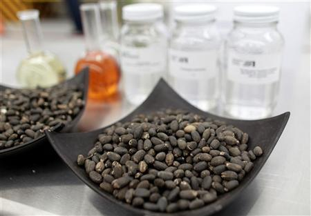Jatropha seeds, the oil of which is used to produce biofuel, are seen in Chiapas April 1, 2011. REUTERS/Henry Romero