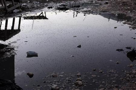 A puddle full of mosquitoes is seen in Jimani on the border between Dominican Republic and Haiti in this picture taken October 10, 2009. REUTERS/Eduardo Munoz