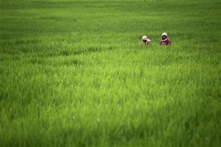 Farmers work in a padi field at Khokana village, located south of Nepal's capital Kathmandu July 27, 2011. REUTERS/Navesh Chitrakar