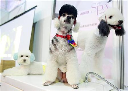 Poodle dogs wait for their turn in a spa at the 2011 Taipei Pet Show inside the Nangang Exhibition Hall in Taipei July 15, 2011. REUTERS/Nicky Loh