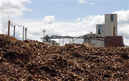 Biomass, the unused portions of logged trees such a branches and the tree tops, sit at the Old Town Fuel and Fiber mill to be burned to generate electricity in Old Town, Maine, June 2, 2009. REUTERS/Brian Snyder