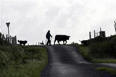 <p>Farmer Bernie Winter drives his cattle to the low field for grazing on Clare Island, County Mayo, Ireland September 23, 2009. REUTERS/Cathal McNaughton</p>
