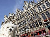 <p>A dog stands on Brussels' Grand Place August 11, 2011. Brussels, the capital of Belgium, which is also the administrative heart of Europe, attracts thousands of tourists to its main square all year-long. REUTERS/Yves Herman</p>
