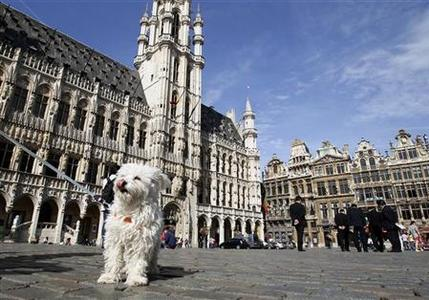 A dog stands on Brussels' Grand Place August 11, 2011. REUTERS/Yves Herman