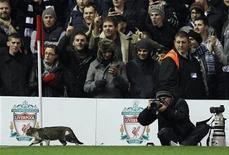 <p>Un gato que invadió el campo de juego del estadio Anfield durante tres minutos en el empate del Liverpool con el Tottenham Hotspur el lunes por la Liga Premier inglesa de fútbol se hizo famoso en Internet. En la foto, el animal caminando por el campo de juego. Feb 6, 2012. REUTERS/Phil Noble</p>