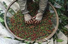 <p>Foto de archivo de un trabajador durante el proceso de selección de granos de café en una granja en Esp'rito Santo do Pinhal, Brasil, mayo 18 2012. El persistente clima seco en el cinturón productor de café en el sudeste de Brasil está comenzando a ser un problema para la próxima cosecha, dijeron el martes un meteorólogo y un agrónomo. REUTERS/Nacho Doce</p>
