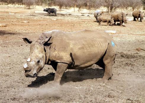 The poaching wars