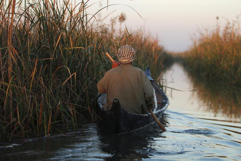 The marshes of Iraq