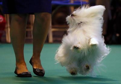 Britain's next top dog