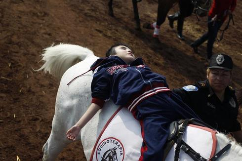 Horse-assisted therapy