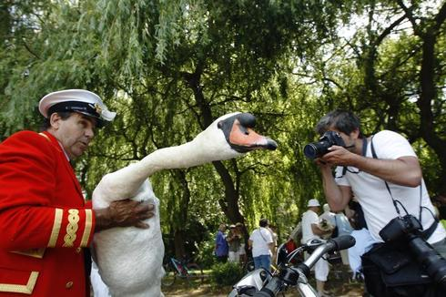 Swan Upping ceremony