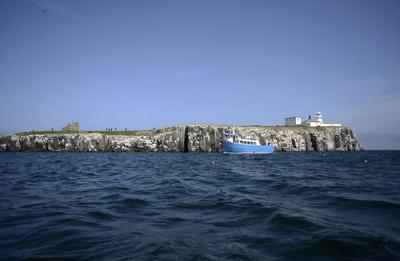 Wildlife of Farne Islands