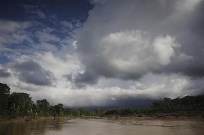 Struggle to survive in the Amazon