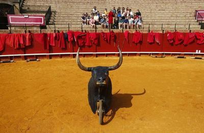 Bullfighting master class