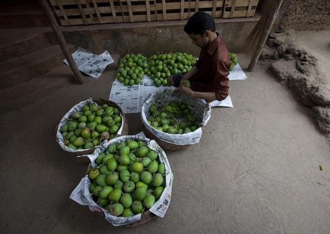 A man sorts Alphonso mangoes in Madhban village, near the proposed site of the Jaitapur nuclear plant in Ratnagiri district, about 360 km (224 miles) south of Mumbai, April 13, 2011. REUTERS/Danish Siddiqui