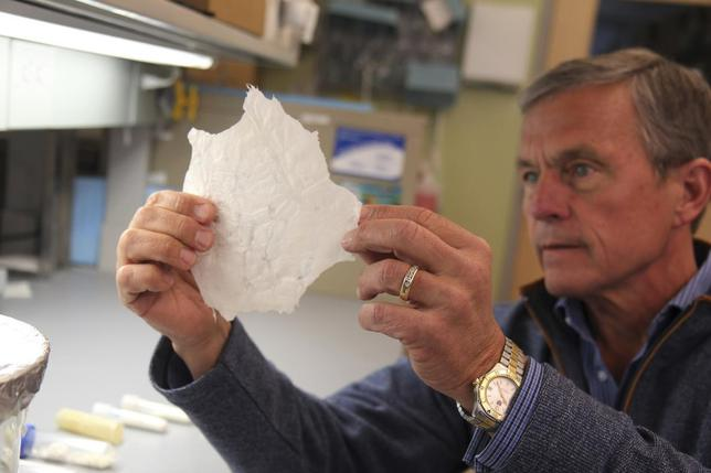 Dr. Stephen Badylak, DVM, PhD, MD, professor of surgery at the University of Pittsburgh School of Medicine (UPMC) and deputy director of the McGowan Institute for Regenerative Medicine, holds a sheet of extracellular matrix or ECM, which is derived from pig bladder in this handout photo provided by UPMC in Pittsburgh, Pennsylvania, April 30, 2014.  REUTERS/UPMC/Handout via Reuters