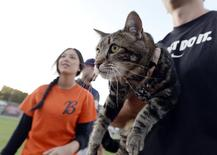Hero cat Tara held by owner Roger Triantafilo leaves after throwing the ceremonial first pitch before the start of Bakersfield Blaze and Lancaster Jayhawks Single A baseball game at Sam Lynn Ballpark in Bakersfield, California May 20, 2014.  REUTERS/Kevork Djansezian