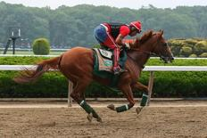 Jun 4, 2014; Elmont, NY, USA; California Chrome ridden by exercise rider Willie Delgado on the track during workouts in preparation for the 2014 Belmont Stakes at Belmont Park. Mandatory Credit: Anthony Gruppuso-USA TODAY Sports