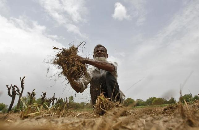A farmer removes dried grass from his rice field against the backdrop of pre-monsoon clouds on the outskirts of Ahmedabad June 13, 2013. REUTERS/Amit Dave/Files