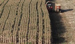 A segunda safra de milho do Brasil em 2013/14 foi estimada em 45,66 milhões de toneladas, informou nesta terça-feira a Conab, que havia projetado colheita de 43,74 milhões de toneladas em seu relatório de maio 06/02/2014 REUTERS/Paulo Whitaker