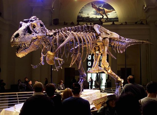 The dinosaur named ''Sue,'' a 41-foot-long Tyrannosaurus rex, is shown on display at the Field Museum in Chicago, Illinois in this May 17, 2000 file photo. REUTERS/Sue Ogrocki/Files