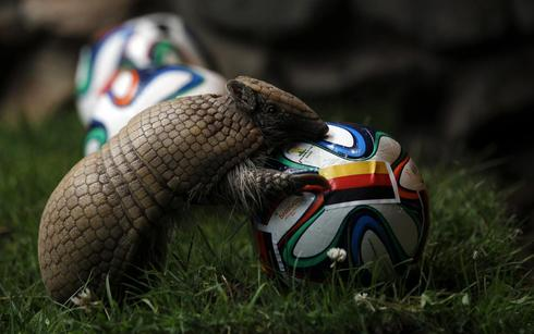 World Cup animals
