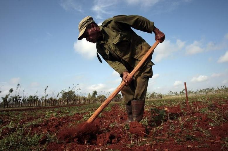 A farmer works the land in La Lisa on the outskirts of Havana March 28, 2014. REUTERS/Stringer/Cuba