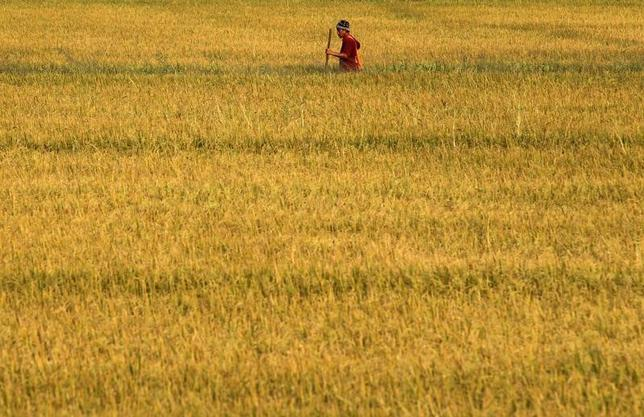 A Thai farmer works on his rice field in Nonthaburi province, on the outskirts of Bangkok March 1, 2014.  REUTERS/Chaiwat Subprasom