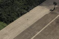 Plantação de trigo em um terreno que costumava ser de mata virgem na região amazônica, no Pará. 20/04/2013. REUTERS/Nacho Doce