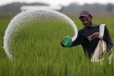 A farmer casts fertilizer in a rice plantation in the central state of Cojedes,Venezuela  October 14, 2010. REUTERS/Carlos Garcia Rawlins