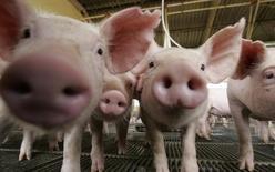 A Rússia ampliou em setembro sua liderança como principal destino dos embarques brasileiros de carne suína, em um reflexo da estratégia de Moscou de substituir as importações dos Estados Unidos e da Europa por produtos de outros países, principalmente do Brasil. 28/02/2008 REUTERS/Paulo Whitaker