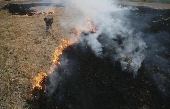 A labourer burns paddy waste stubble at a field on the outskirts of Chandigarh November 5, 2009. REUTERS-Ajay Verma-Files