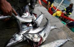 Южноафриканские рыбаки выгружают улов в Кейптауне 21 августа 2005 года. Южноафриканская республика впервые за два десятка лет возобновила поставки рыбы и морепродуктов в Россию, которая запретила ввоз продуктов с Запада в ответ на санкции из-за Украины и пытается найти замену. REUTERS/Mike Hutchings