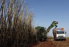 Trabalhadores colhem cana em uma fazenda, em Maringá. 13/05/2011 REUTERS/Rodolfo Buhrer/La Imagem