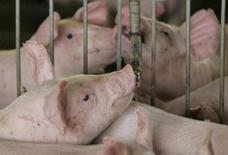 Porcos bebem água em fazenda na cidade de Lucas do Rio Verde, Mato Grosso. 28/02/2008 REUTERS/Paulo Whitaker