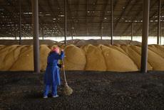 Una empleada trabaja en una bodega durante la cosecha de maíz cerca de la villa de Moskovskoye, en las afueras de Stavropol. Imagen de archivo, 14 octubre, 2014. Las exportaciones de granos de Rusia fueron interrumpidas debido a restricciones dispuestas para proteger los suministros domésticos, poniendo en riesgo grandes transacciones, dijo el miércoles un influyente grupo del sector.  REUTERS/Eduard Korniyenko