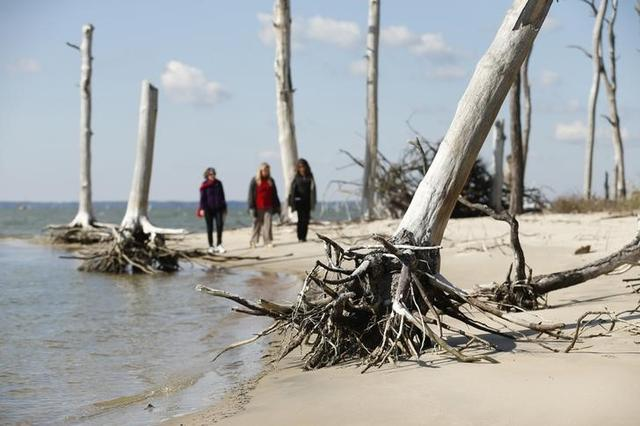 Women walk through a coastal ghost forest believed to be caused by sea level rise on Assateague Island in Virginia, October 25, 2013. REUTERS/Kevin Lamarque