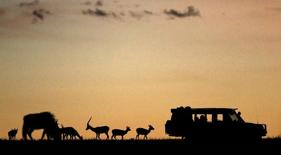 Animals graze near tourists at sunset at the Naboisho Conservancy adjacent to the Masai Mara National Reserve in this file photo taken on October 7, 2014.   REUTERS/Goran Tomasevic