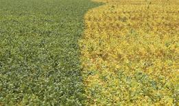 Vista de plantação de soja na cidade de Primavera do Leste, Mato Grosso. 07/02/2013 REUTERS/Paulo Whitaker