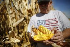 Un agricultor revisa mazorcas de maíz durante su cosecha en un campo en Minooka. Imagen de archivo, 24 septiembre, 2014. Los productores estadounidenses sembrarán menos acres de soja, maíz y trigo en el año comercial 2015/2016 ante la caída de los precios de esas materias primas, dijo el jueves el Departamento de Agricultura.  REUTERS/Jim Young