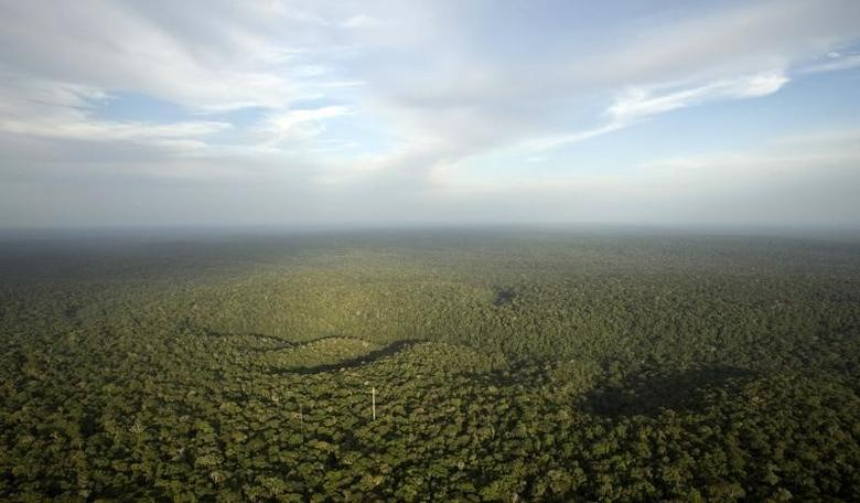 A view is seen from the Amazon Tall Tower Observatory (ATTO) in Sao Sebastiao do Uatuma in the middle of the Amazon forest in Amazonas state January 10, 2015.  REUTERS/Bruno Kelly