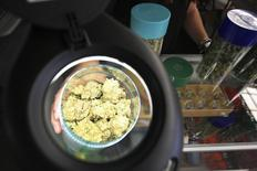 Marijuana is seen under a magnifier at the medical marijuana farmers market at the California Heritage Market in Los Angeles, California in this file photo taken July 11, 2014.  REUTERS/David McNew/Files